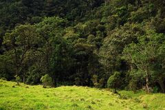 View of Cocora Valley in Salento, Colombia. The Cocora valley - Valle de Cocora in spanish - is a valley in the department of Quindío in the country of stock images