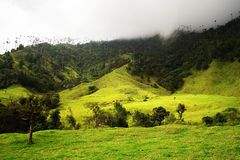 View of Cocora Valley in Salento, Colombia. The Cocora valley - Valle de Cocora in spanish - is a valley in the department of Quindío in the country of royalty free stock photography