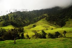 View of Cocora Valley in Salento, Colombia. The Cocora valley - Valle de Cocora in spanish - is a valley in the department of Quindío in the country of royalty free stock images