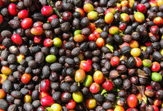 View of the coffee cherries Royalty Free Stock Photos