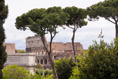 View of the Coliseum from Palatine Hill in Rome Stock Photography