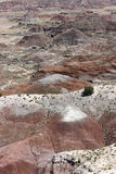 View of the Colorful, Arid Painted Desert and Scrub Vegetation Royalty Free Stock Photos