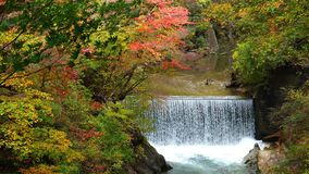 View of colorful autumn foliage with the flow of water stream