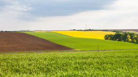 View of colorful fields Royalty Free Stock Photography