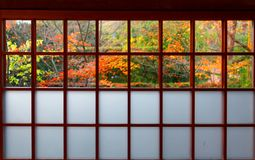 View of colorful maple trees in the courtyard garden behind the sliding screen door Shoji of a traditional Japanese room. In Genko-an, a Buddhist Temple famous royalty free stock image
