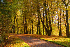 View  colorful park alley in autumn. Royalty Free Stock Image