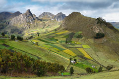 View of colorful terrace fields Royalty Free Stock Image