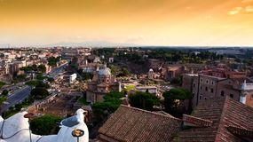 View of the colosseum, Italy. A seagull in Rome with the background view of the colosseum, Italy Royalty Free Stock Image
