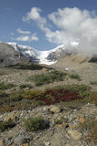 View at Columbia Icefield in Canadian Rockies Stock Photos