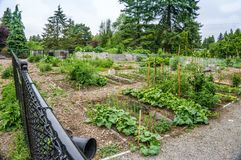 Community Garden 2. A view of a community garden in Seatac, Washington royalty free stock photo