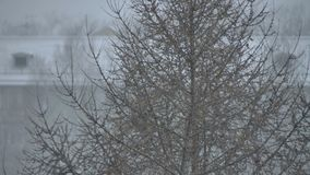 View of the coniferous tree snow and wind stock footage