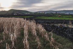 View of Corn and Animal Fields on Terceira Island royalty free stock images