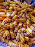 View of corn harvested without leaves stock image