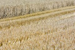 Partly harvested cereal field royalty free stock photography