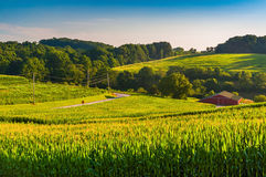 View of cornfields and a barn in rural York County, Pennsylvania Stock Photo