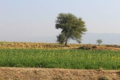 A beautiful view of the country of Punjab. A view of country village roads and fields in Punjab, Pakistan, Asia, India, where a brick kiln emitting smoke and Royalty Free Stock Image