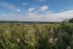 View of the countryside around Cranbrook in Kent Stock Images