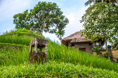 View of countryside in bali, near ubud Stock Photography