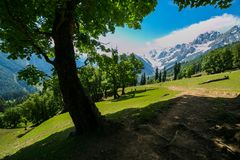The view of countryside between the forest, in Sonamarg, Jammu and Kashmir state, India. Beautiful mountain view of Sonamarg, Jammu and Kashmir state, India royalty free stock images