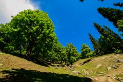 The view of countryside between the forest, in Sonamarg, Jammu and Kashmir state, India. Beautiful mountain view of Sonamarg, Jammu and Kashmir state, India stock images