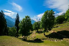 The view of countryside between the forest, in Sonamarg, Jammu and Kashmir state, India. Beautiful mountain view of Sonamarg, Jammu and Kashmir state, India royalty free stock photo