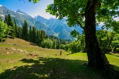 The view of countryside between the forest, in Sonamarg, Jammu and Kashmir state, India. Beautiful mountain view of Sonamarg, Jammu and Kashmir state, India stock photography