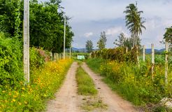 View of countryside road. View of road in the countryside along with fence and flower royalty free stock photography