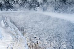 View of the Credit River on a frosty winter morning. Water vapour rises from the icy water and ducks swim along looking for food Royalty Free Stock Images