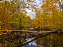 Forest Creek in Autumn, Fall Foliage and Colors stock images