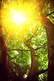 View through crone of the tree with translucent sun instagram st Royalty Free Stock Photos