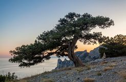 View on crooked tree on stony path and inuksuk rocks in balance. Near it, clean blue sky in background and seascape with rocks behind after sunset in Crimea Stock Images