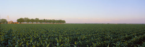 View of crop field Stock Image