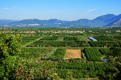 View of crop fields Royalty Free Stock Image