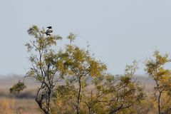 View of crow in Evros river, Greece. Royalty Free Stock Image