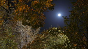 A view through crowns of trees to the moon. Full moon. stock video