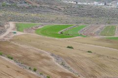 View of Cultivated Field. In the Canary Islands royalty free stock image