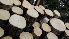 View of the cut logs that are piled at the top stock footage