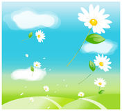 The view of Daisy flowers Stock Image