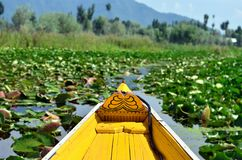 View of Dal lake from Shikara royalty free stock images