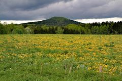 View of dandelion field. Before storm royalty free stock photos