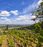 View of the Danube of Vienna from Kahlenbergerdorf Stock Photo