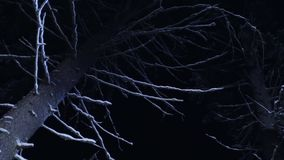 Big naked tree with branches covered by snow shown at freezing winter night. View of dark big naked tree with branches covered with snow in silent winter forest stock footage