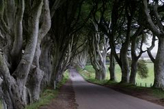 View of `The Dark Hedges` in Ireland. This is `The Dark Hedges` known as The King`s Road in Game Of Thrones in Ireland Royalty Free Stock Photography