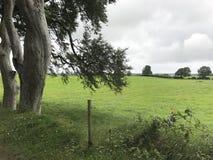 Dark Hedges Northern Ireland Scenery Royalty Free Stock Photography
