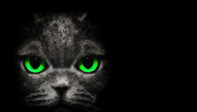 View from the darkness. Cat with green eyes on a black background Royalty Free Stock Images