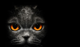 View from the darkness. Cat with orange eyes on a black background. View from the darkness. Cat with orange eyes on black background royalty free stock photo