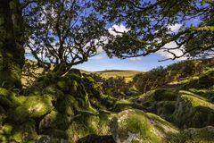 View of Dartmoor from Wistmans Wood. A view of Dartmoor from Wistmans Wood on a sunny September day with blue sky and clouds stock photography