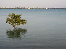 View of Darwin city over the bay, Australia Royalty Free Stock Photography