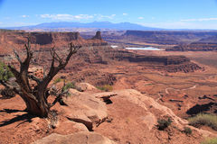 Dead Horse Point. View from Dead Horse Point Visitor Center. Colorado River cutting through becomes Meander Canyon stock photography