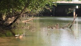 Georgia, Medlock Bridge, A view of dead trees sticking out of the Chattahoochee River. A view of dead trees sticking out of the Chattahoochee River stock video footage